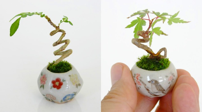 bonsai-1-new
