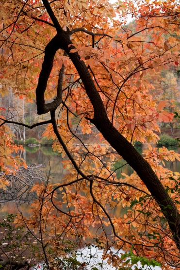 Vogel Tree Fall