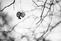 Hanging - Fall 2012