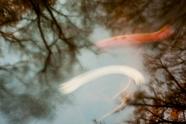 Two Shades of Orange - Nov 2012
