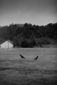 Two Crows