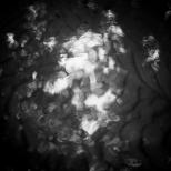 Lightplay - July 2013