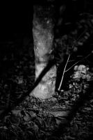 Shadow on Tree